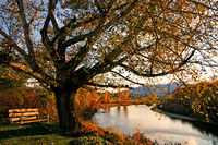 Porch swing in an oak tree displaying fall colors along the Blackfoot river, MT